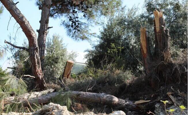 Neşet Tarhan'dan Orman Talanına Tepki! 2 - neset tarhandan orman talanina tepki