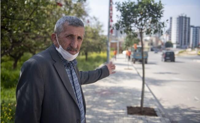 Mersin Büyükşehir Belediyesi Toroslarda Kaldırımları Ağaçlandırıyor