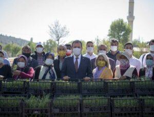 Mersin Büyükşehir, Silifke'de Üreticilere Fidan Dağıttı