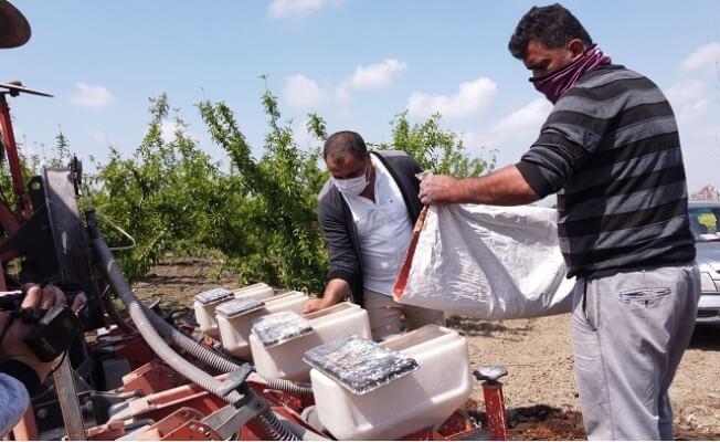 Tarsus Belediyesi Yerli Tohumu Yaygınlaştırıyor