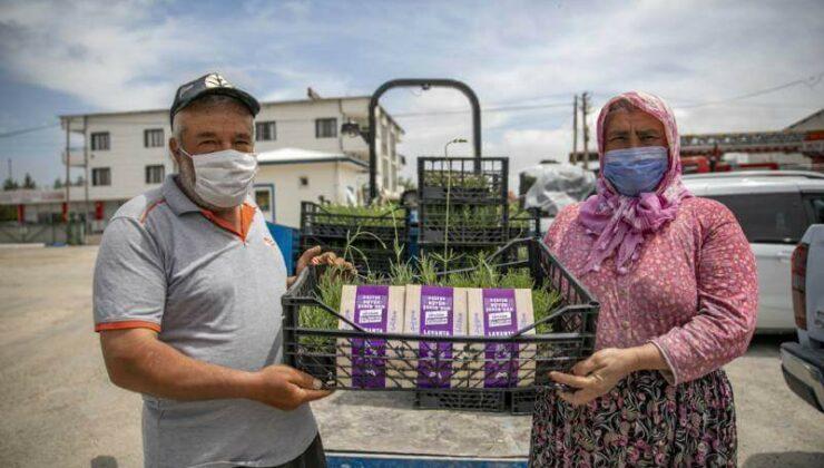 Mersin Büyükşehir, Gülnar'da Üreticilere Lavanta Fidesi Dağıttı
