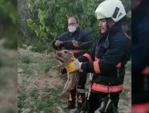 Tarsus'ta Sulama Havuzuna Düşen Yavru Domuzu İtfaiye Kurtardı