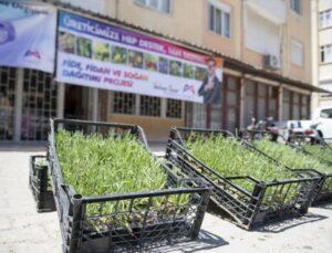 Mersin Büyükşehir Silifke'de Üreticilere Lavanta Fidesi Dağıttı